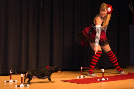 A trained dog act